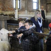 visite-pedagogique-agneaux